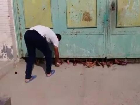 مدرسه کوت عبدالله اهواز با دستهای مشتاق و منتظر دانشآموزانش دیده شد