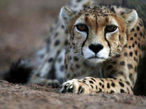 رهاسازی ایران در پارک ملی توران