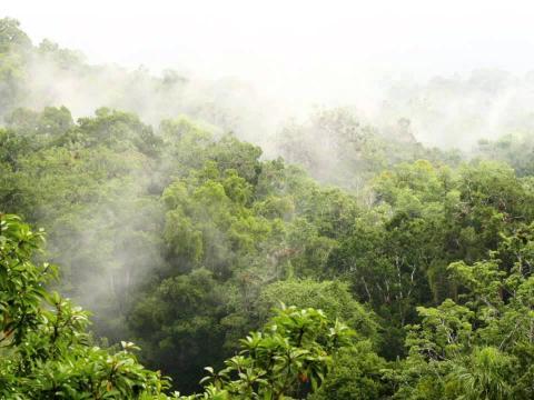 از کلمبیا تا ایران چقدر راه است؟ مقاومت در برابر جنگل زدایی در کلمبیا